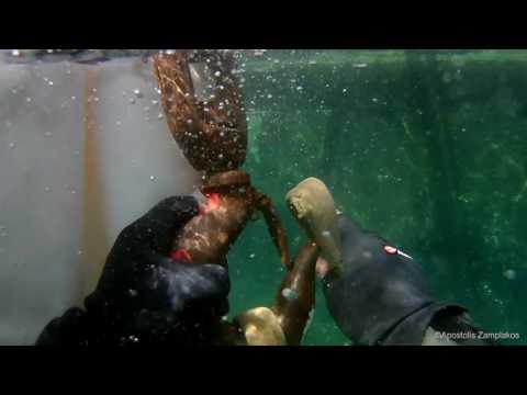 Voluntary Underwater Cleaning 2017 N.O.SYROU