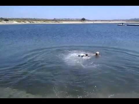 Charlie's first swim