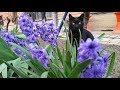 Relaxing Cat Video 38