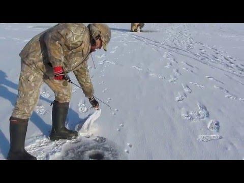видео рыбалка на осколе