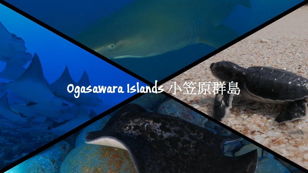 Ogasawara Islands, Japan 日本...