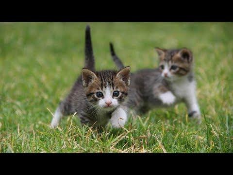 Ygor Jensouniev - La vie de chaton - (diapolala façon Vincent Scotto)