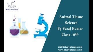 Animal Tissue - Class 9th | Science |  Suraj Kumar | Video Lecture | Study Khazana