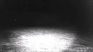 The Critters In My Backyard - Trail Cam Footage from the Week of March 31, 2019