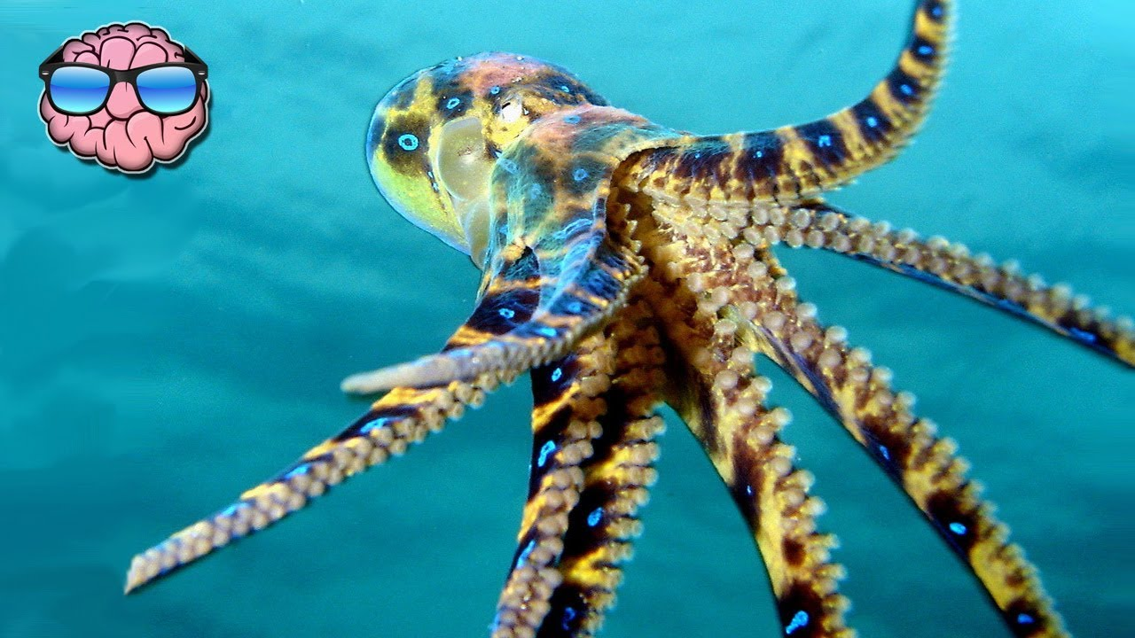 Download Top 10 Most Venomous Animals On Earth
