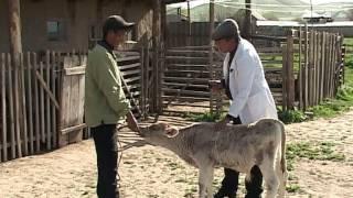 Как уберечься от заразных болезней животных?