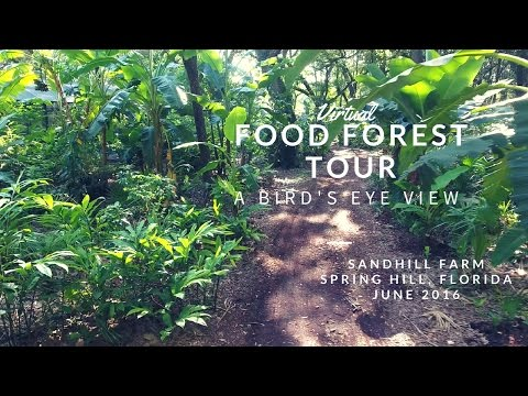 Food Forest Tour at Sandhill Farm: A Bird's Eye View