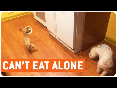 Dog Hates to Eat Alone | Table for Two