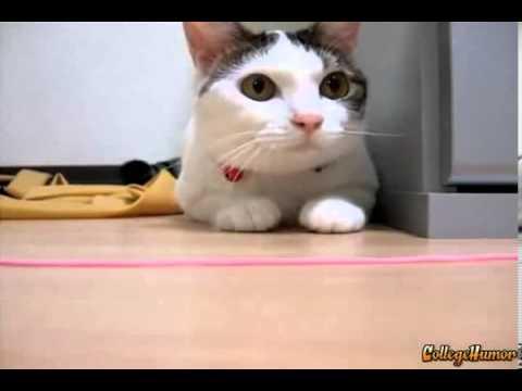 хаха кот танцует под музыку