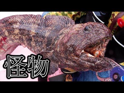 【衝撃】北海道オホーツク海の怪物「オオカミウオ」がついに・・・#5
