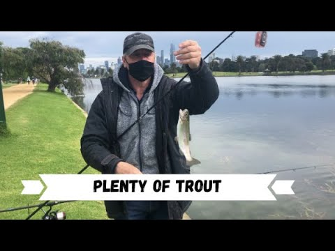 Trout Fishing Albert Park Lake