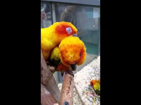 how to stop my sun conure from biting