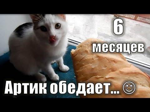 Котенок 6 месяцев | Артик обедает:)
