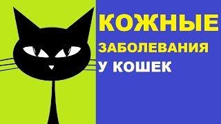 Кожные заболевания у кошек - дерматиты, лишай, демодекоз и др