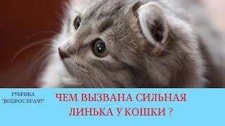 26.01.18 Сильная линька у кошки