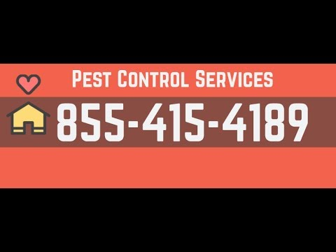 Rodent Control Belmont CA | 855-415-4189 | Call Toll Free
