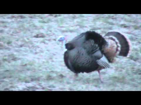 The Washington Boys Drop Zone Huntin Music Video