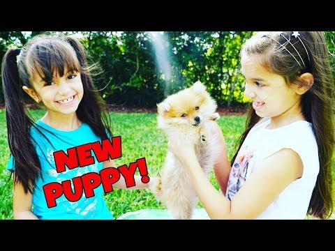 WE GOT A NEW PUPPY!!! Best Puppy Surprise Ever!