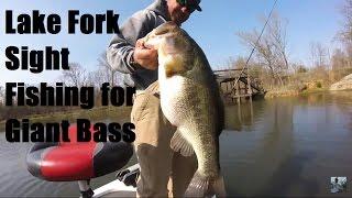 Video Bass Fishing Lake Fork: Sight Fishing for Giant Bass download MP3, 3GP, MP4, WEBM, AVI, FLV Juli 2018
