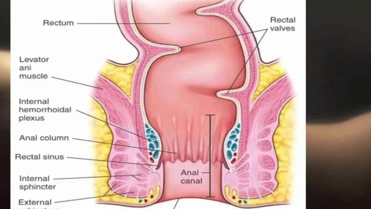 Anatomy of anal sex