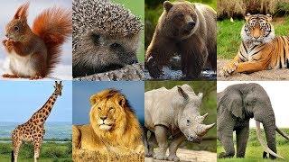 Голоса диких животных