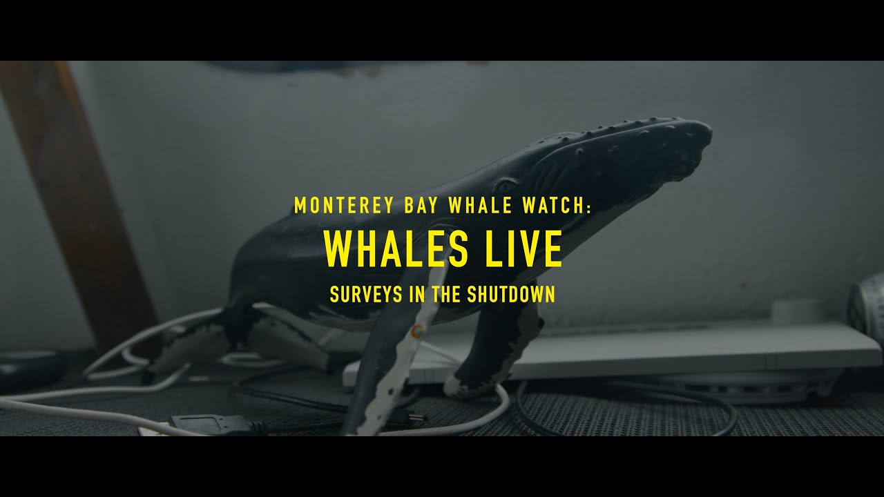 Monterey Bay Whale Watch: Whales Live Survey in The Shutdown