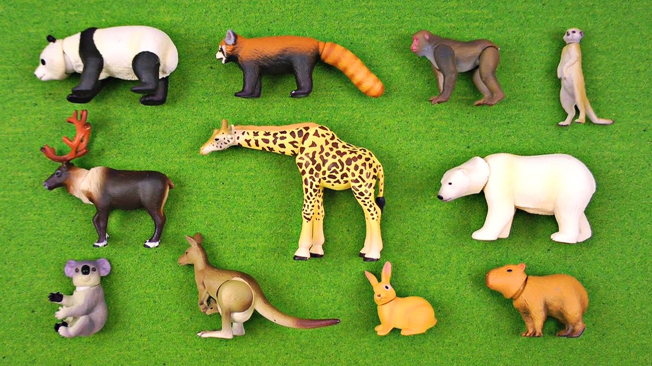 animal wild animals african names facts learning fun interactive brian kid york