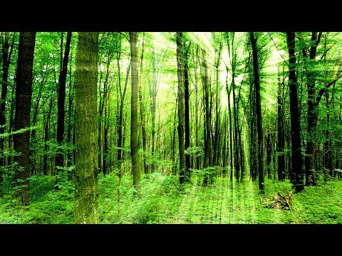 Healing Meditation Music, Relaxing Music, Calming Music, Stress Relief Music, Peaceful Music, ☯3344