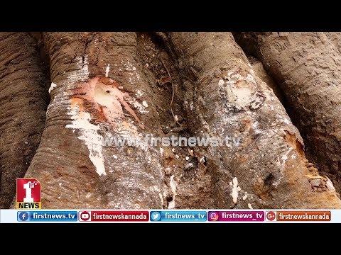 ಮರಕ್ಕೆ ವಿಷ ಉಣಿಸುವ ಕಿಡಿಗೇಡಿಗಳಿಗೆ ಧಿಕ್ಕಾರ.. | Pipal Tree Poisoned in Jayanagara, Bengaluru