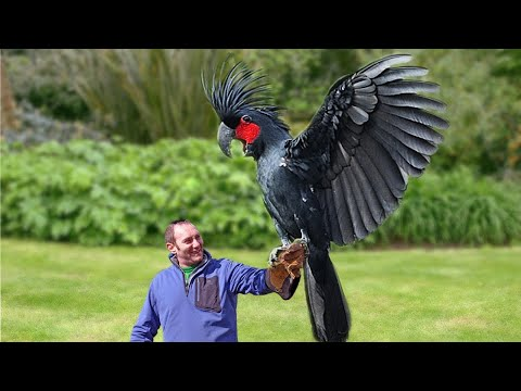Dünyanın En Pahalı 10 Kuşu - 1 Milyon 400 Bin Dolara Kuş Alır Mıydınız? indir