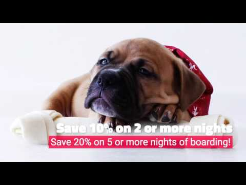 Save on Pet Boarding at Springbrook Animal Care Center!