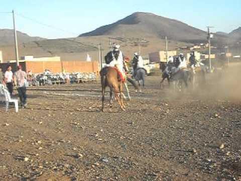 جمعية الساحل للفروسية التقليدية و تربية الخيول . ال