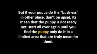 Puppy Potty Training | What You Need To Know
