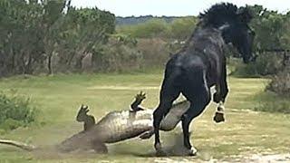 Çılgına Dönmüş Hayvanların En İnanılmaz Karşılaşmaları