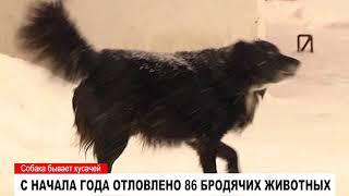 Бродячие собаки представляют серьезную опасность
