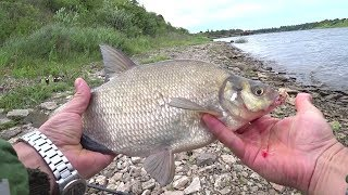 Рыбалка на ФИДЕР и СПИННИНГ Ловля летом форель лещ окунь плотва щука Видео нарезка
