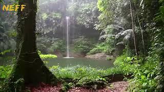 Download lagu Yağmur Ormanı Kuş Sesleri ve Şelale ile Huzur Bulacaksınız MP3