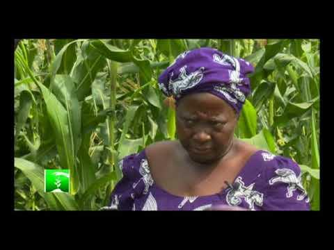 FARMERS MARKT: WOMEN FARMERS BRAVING THE ODDS