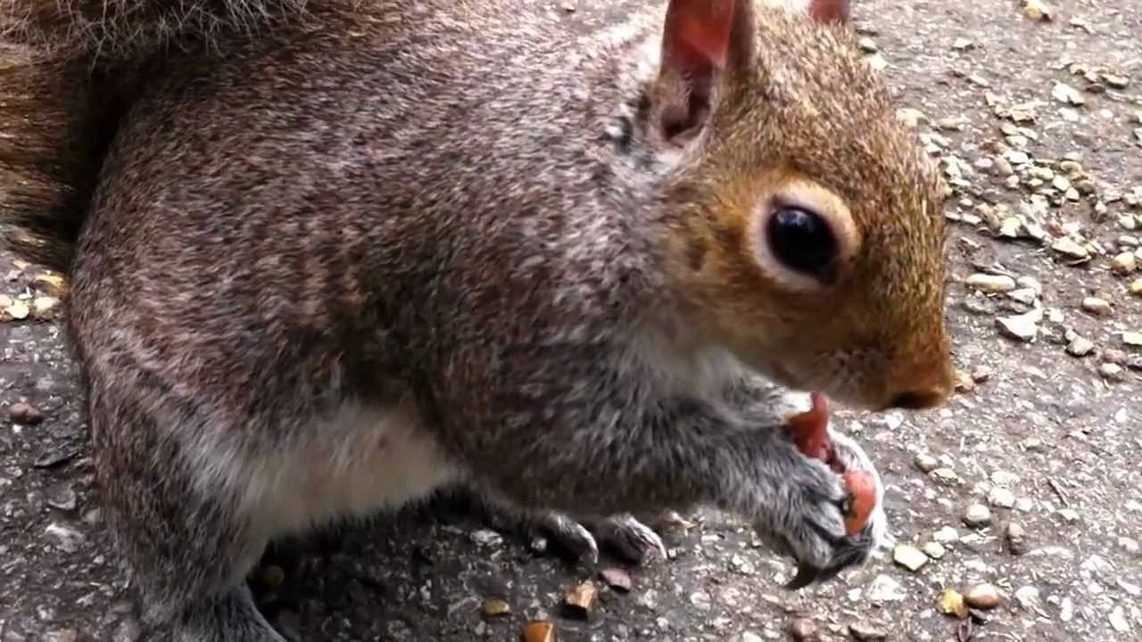 how to stop feeding squirrels