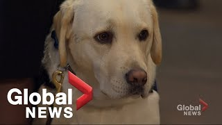George H.W. Bush's loyal service dog 'Sully' visits his casket