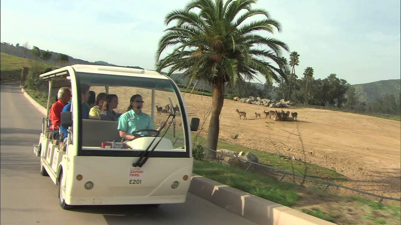San diego zoo coupons living social