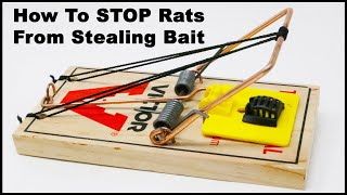 How To STOP Rats From STEALING bait with the Bait Cage. Mousetrap Monday