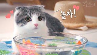 고양이와 물고기 놀이를 해볼까요?