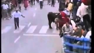 Toro Reconoce a su dueño