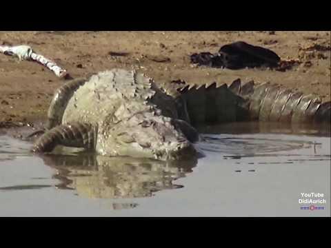 chambal-river-safari-मगरमच्छों-और-घड़ियाल-बीच-चम्बल-नदी-सफारी--क्या-ये-बच-wildlife-sanctuary-indien