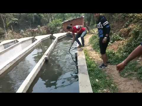 Trout fishing in Nepal