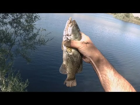 Catching Bass And Creative Sight Fishing - Coyote Creek