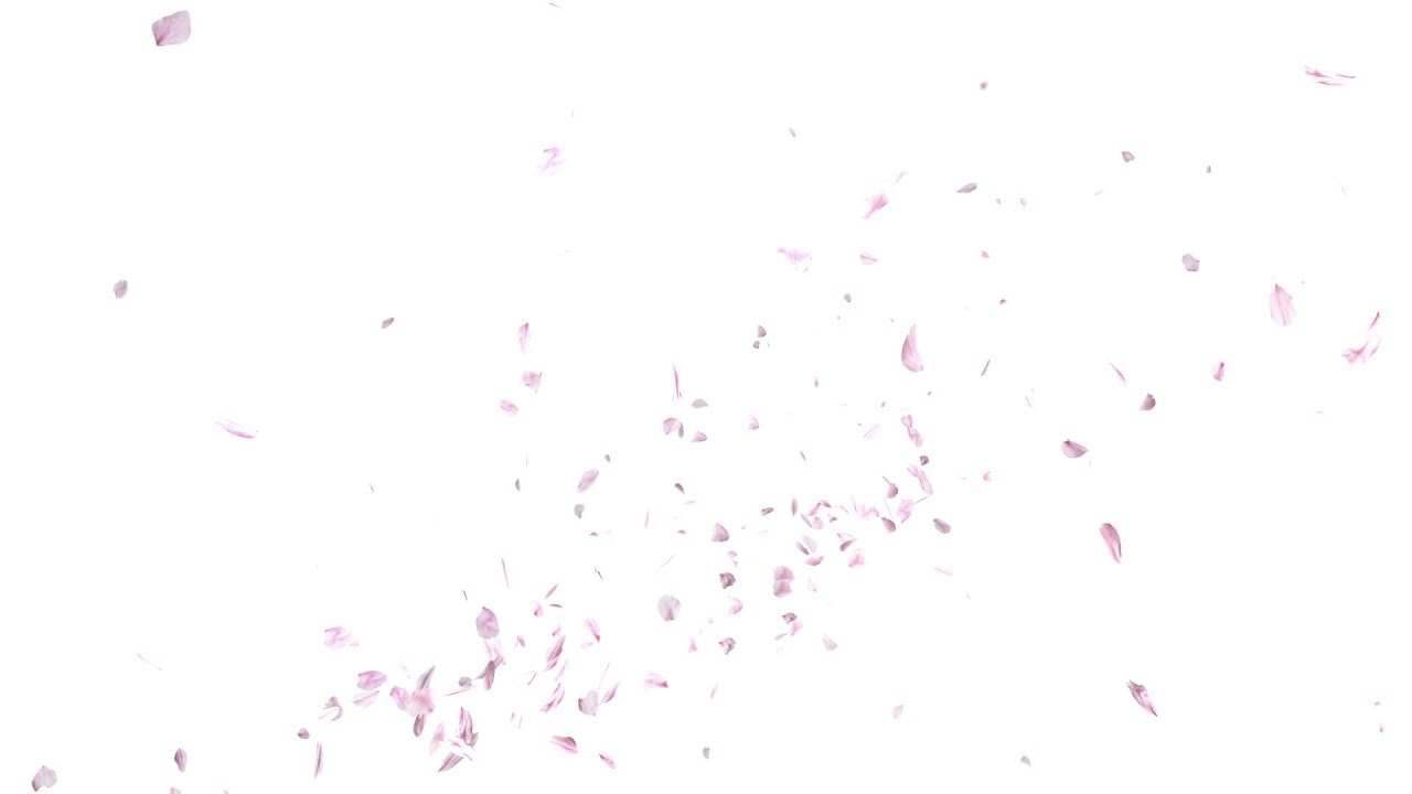 Cherry Blossom Wallpaper Hd 【hd】白い背景に桜の花びらが舞い上がるイメージ Youtube