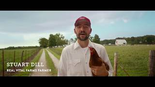 Bullsh t Free Eggs The Difference Between Pasture Raised And Cage Free Eggs