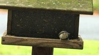 Winterbirdfeeding.mov